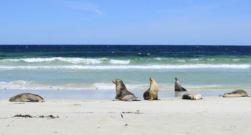 Travelspot: Kangaroo Island