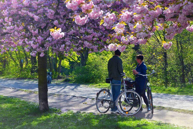 Doen in Berlijn: bekijk in de lente zeker de prachtige Sakurabloesem