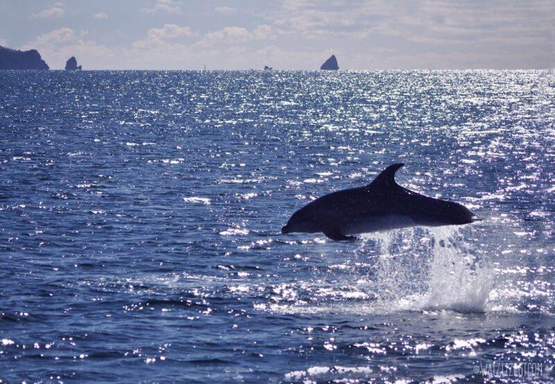 Op jacht naar dolfijnen in Bay of Islands met de Dolphin Seeker