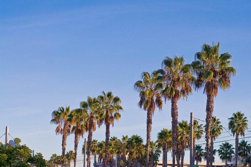 Palmbomen in Downtown San Diego