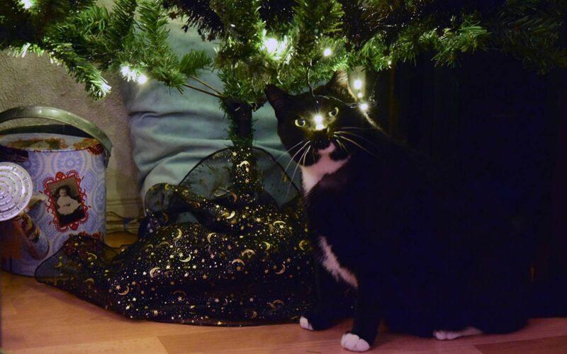 20 december 2017: katten en kerstbomen, altijd een goeie combi