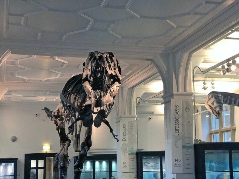 6 juni 2018: Meet Stan the T-Rex in Manchester Museum